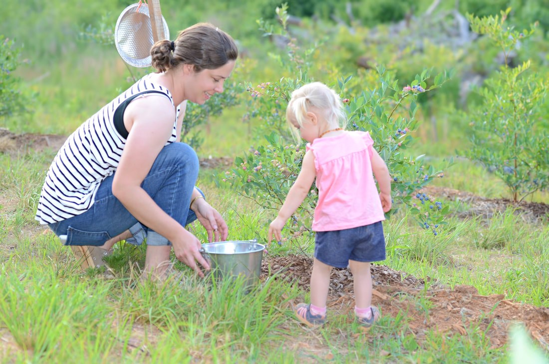 Pleasant Union Farm blueberry picking mom