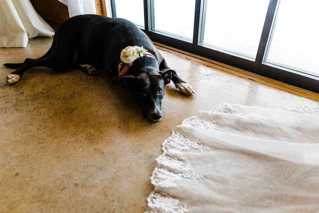 Dog in wedding party